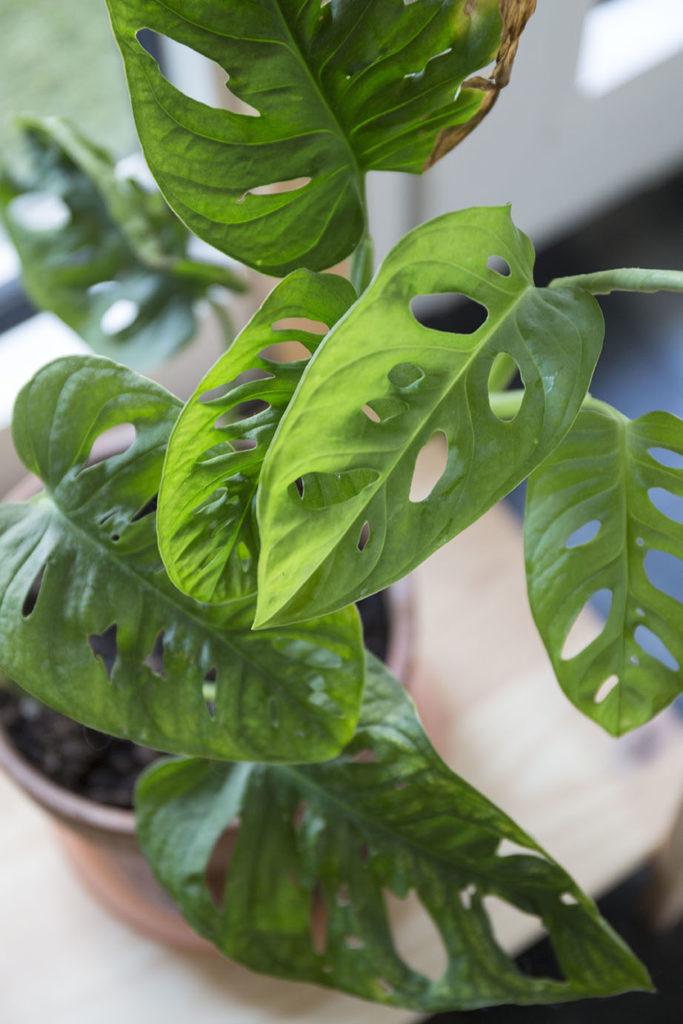 interieur entretien plante