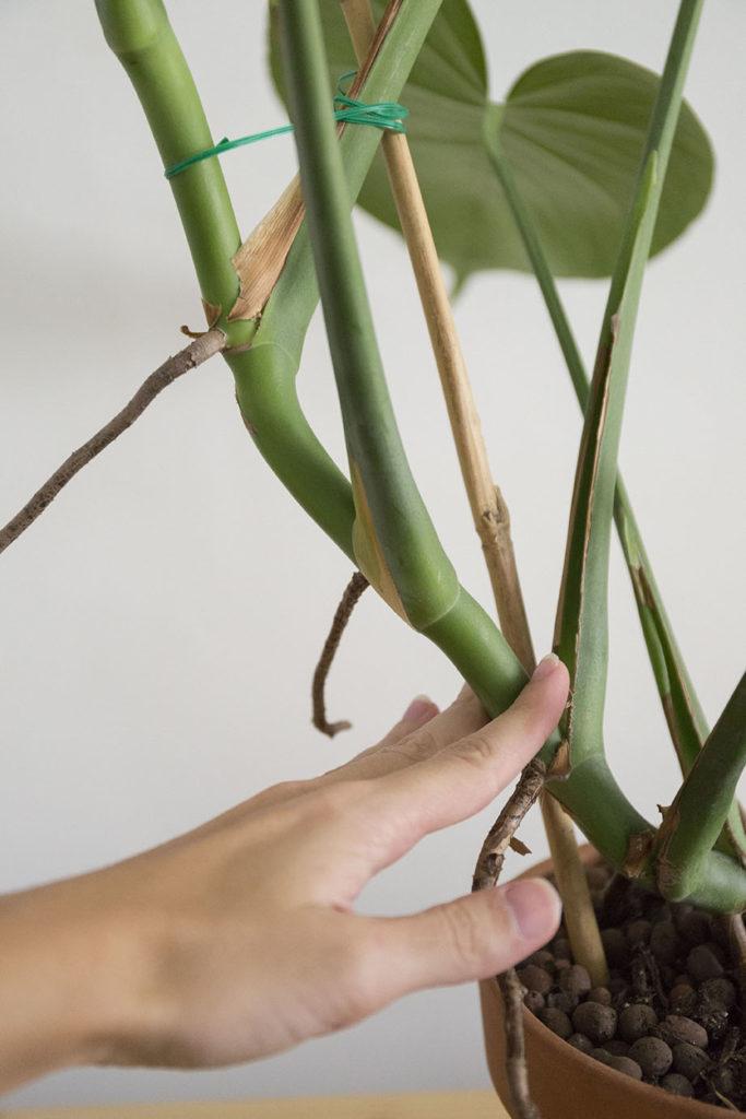 interieur grande plante