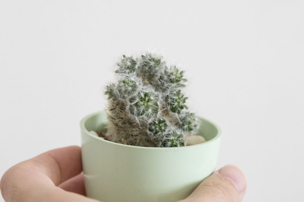 entretien cactus plante