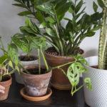 plante entretien hiver