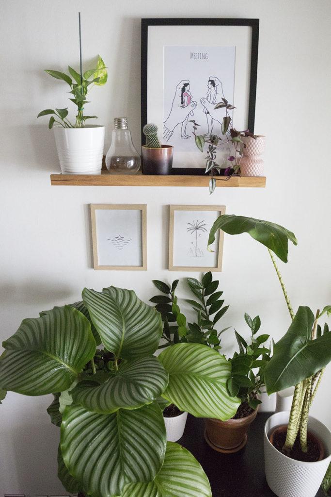 plante depolluante interieur
