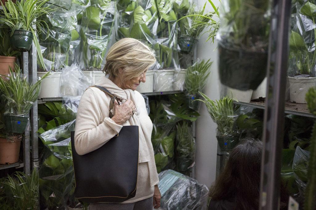 plantes pour tous vertes