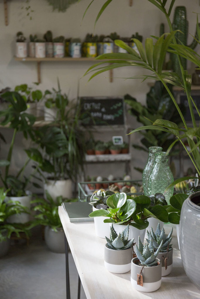 boutique-marguerite flower shop plante