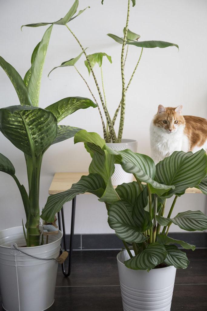 chat plantes
