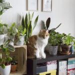 chat plantes interieur