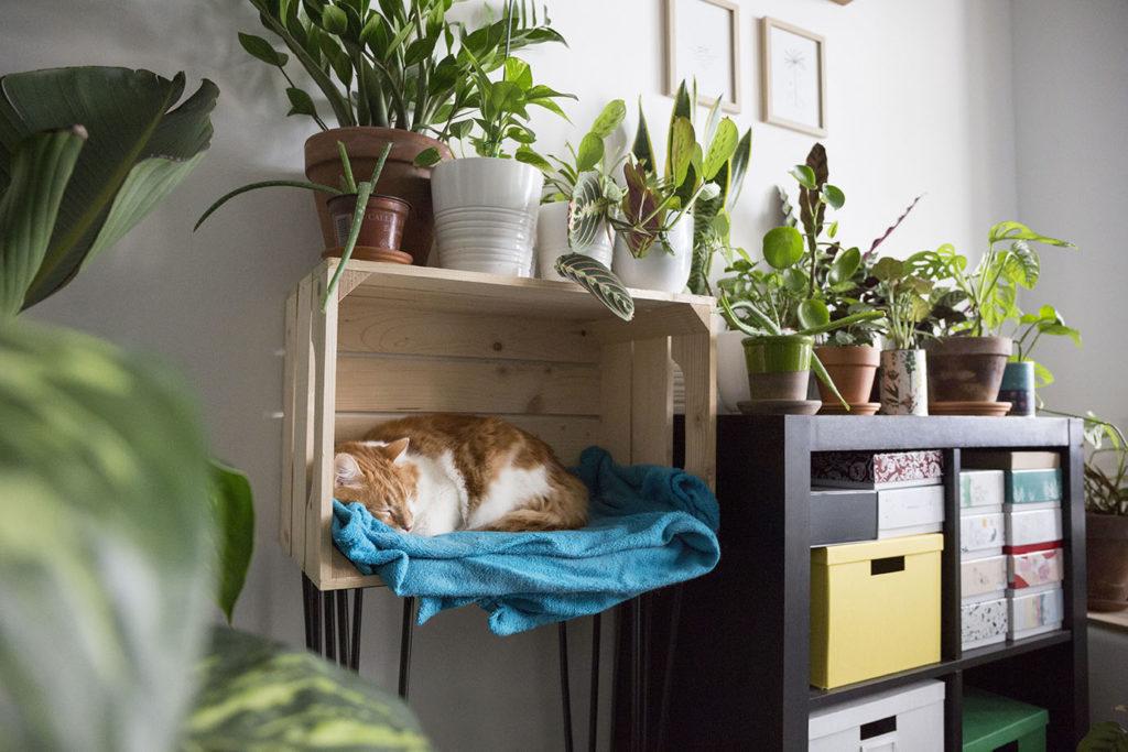 plante interieur chat