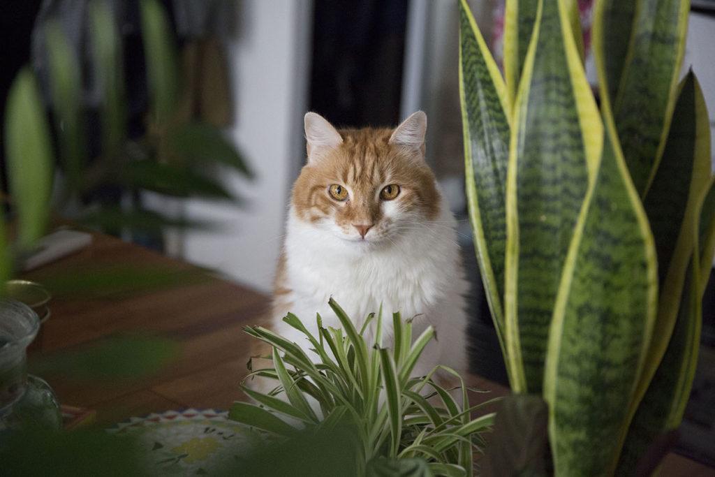 plantes chat interieur