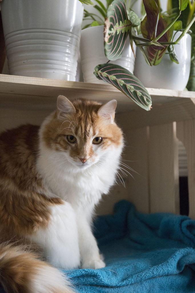 plantes interieur chat