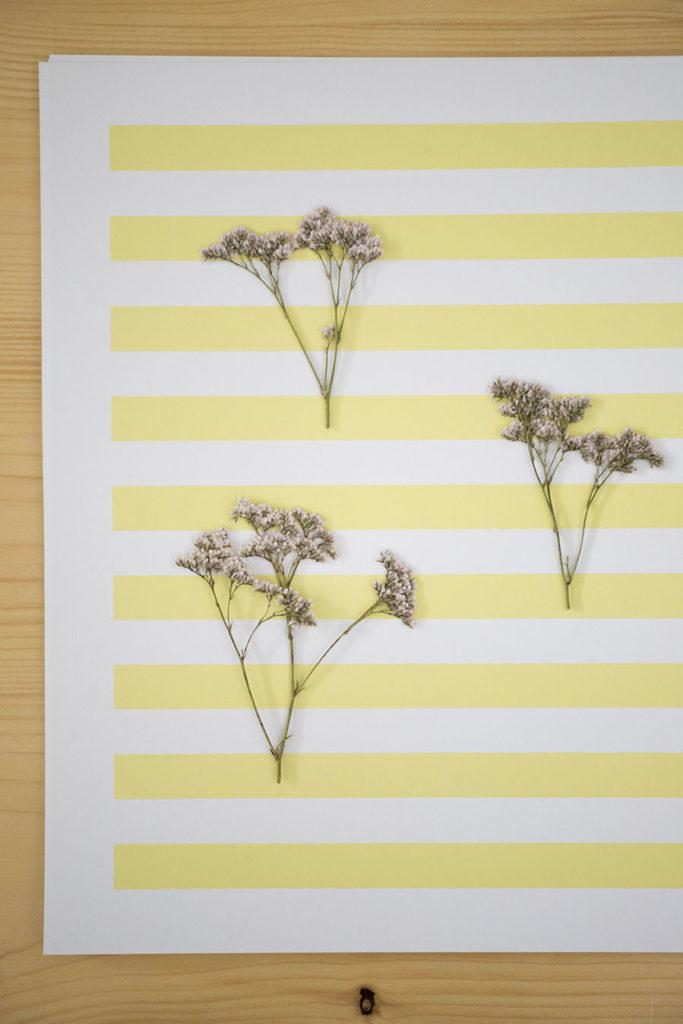 fleur specimen collection