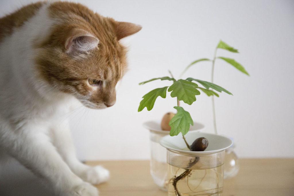 graine sprout germination