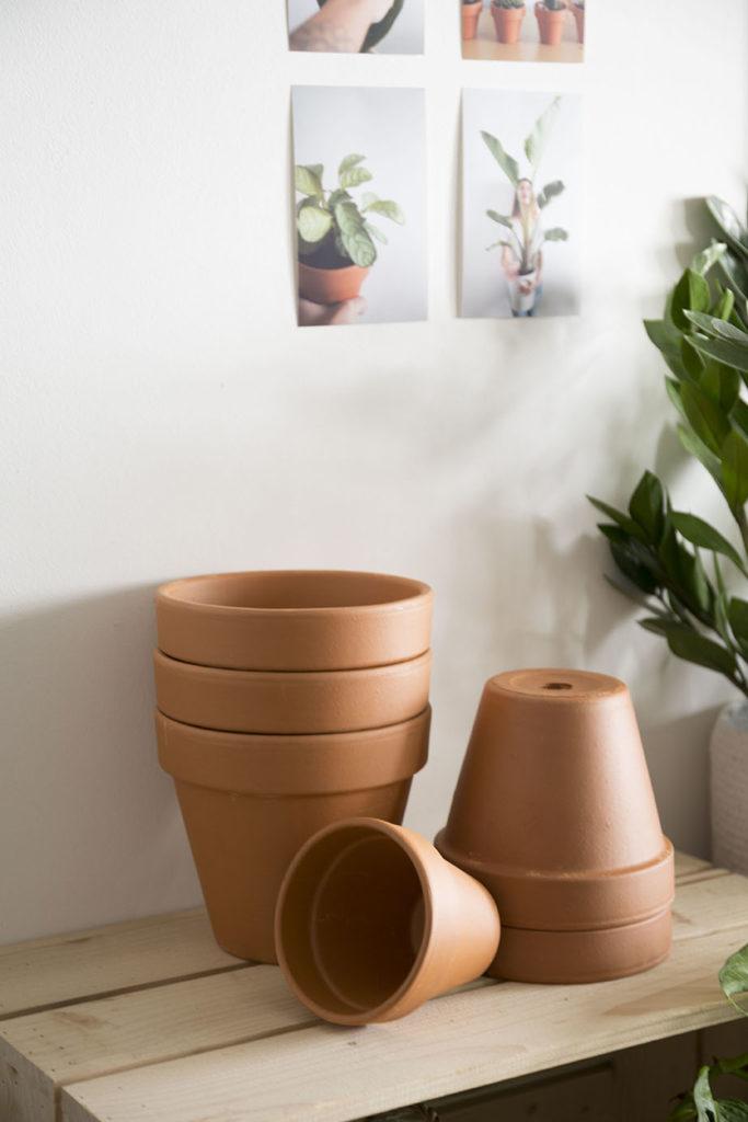 rempoter pots plantes